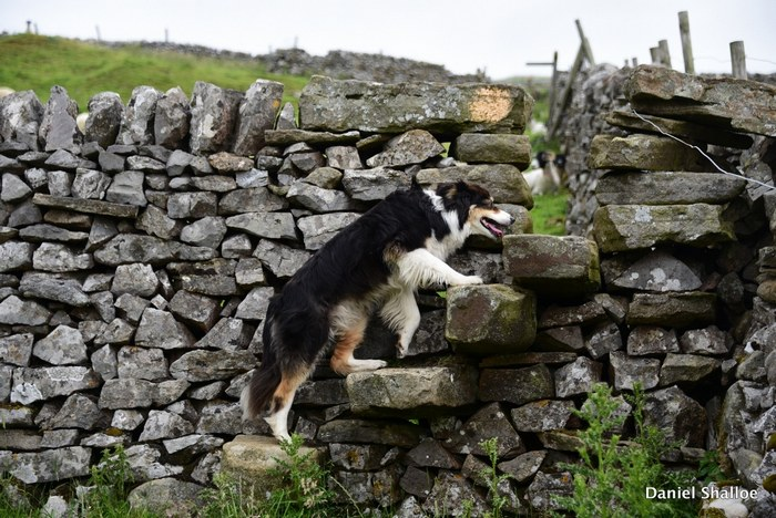 Holiday cottage Appletreewick, Wharfedale, Yorkshire Dales - dog friendly 9